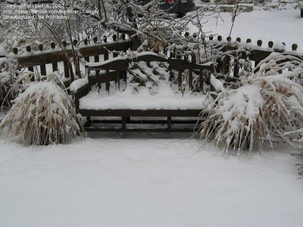 Winter-Garden bench