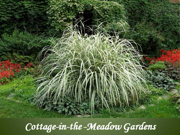 Cottage in the Meadow Gardens main photo