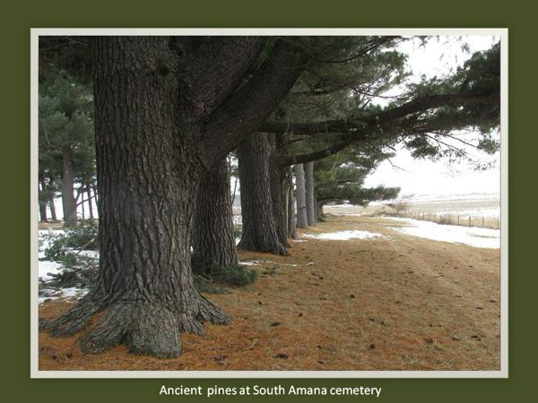 Pines-South Amana cemetery