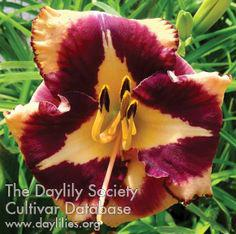Daylily Applie Science